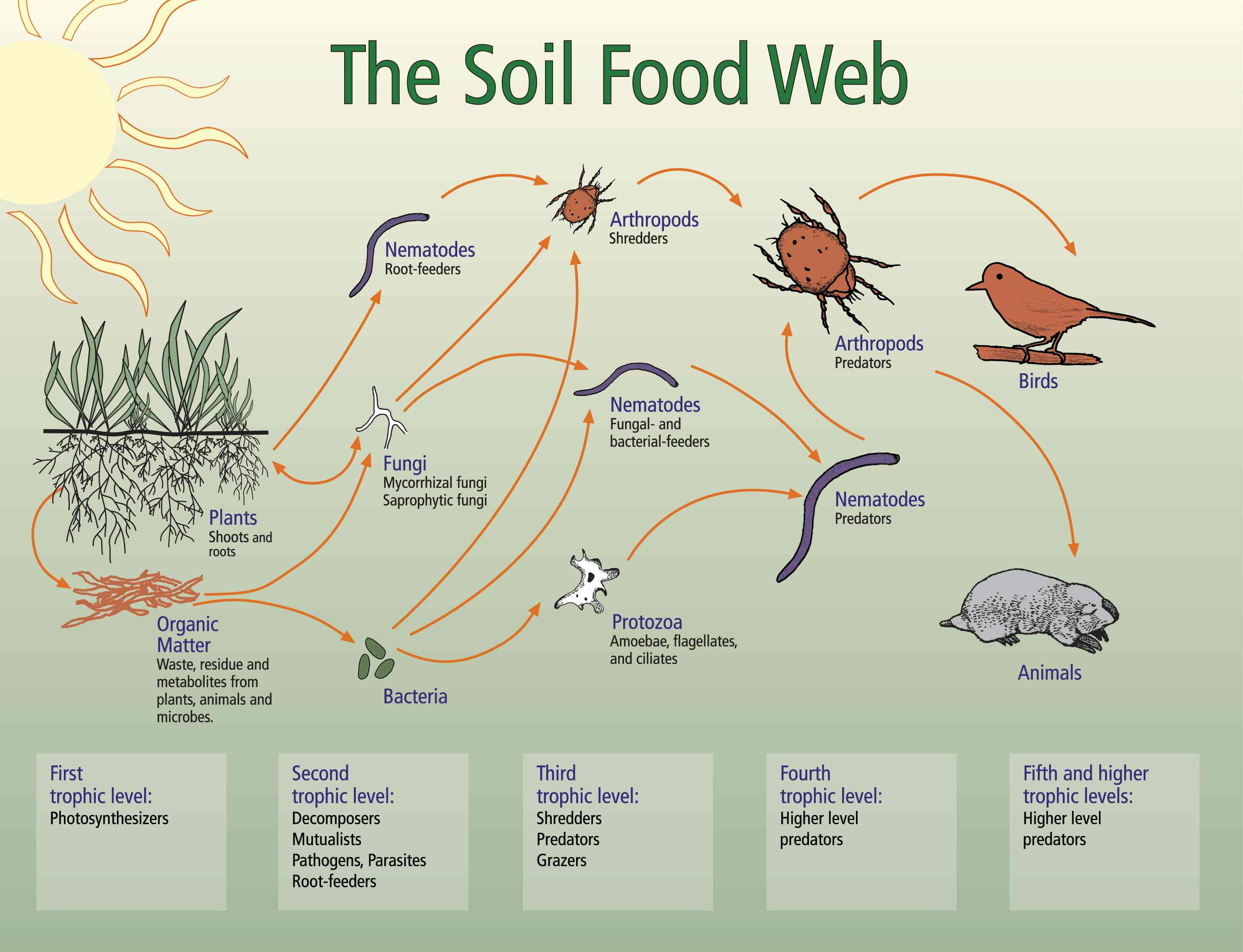 soil-food-web-map-copy.jpg